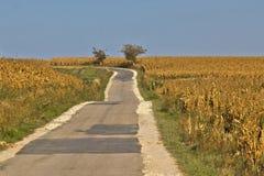 Mooie plattelandsweg door cornfields Stock Afbeeldingen