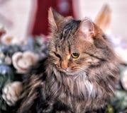 Mooie pluizige bruine gestreepte kat Royalty-vrije Stock Fotografie