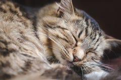 Mooie pluizige gestreepte kattenslaap op zijn hoofdkussen royalty-vrije stock fotografie
