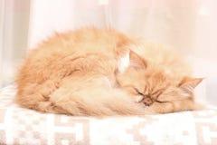 Mooie pluizige rode haired Perzische katslaap op een warme wollen deken royalty-vrije stock foto