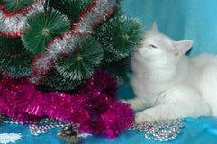 Mooie pluizige witte kat en Kerstboom Stock Foto