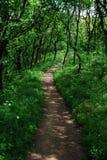Mooie proef in het bos Stock Foto's