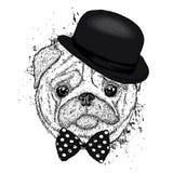 Mooie pug hoed en met een band Grappige Hond Puppy Vectorillustratie voor een prentbriefkaar of een affiche Stock Afbeeldingen