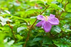 Mooie purpere bloemachtergrond Royalty-vrije Stock Afbeeldingen