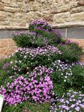 Mooie purpere bloemen royalty-vrije stock foto