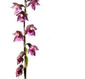 Mooie purpere bloemen Stock Afbeelding