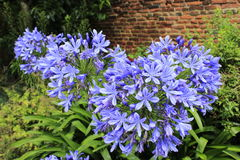 Mooie purpere bloemen royalty-vrije stock afbeeldingen