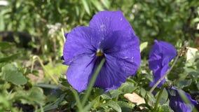 Mooie purpere bloemen stock footage