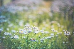 Mooie purpere bloemen, natuurlijke de zomerachtergrond, vaag beeld Inspirational aardconcept royalty-vrije stock afbeeldingen