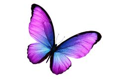 Mooie purpere die vlinder op witte achtergrond wordt geïsoleerd stock afbeelding