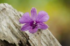 Mooie purpere orchideeën op een boomstomp Royalty-vrije Stock Fotografie