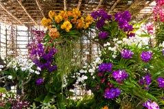 Mooie purpere orchidee Royalty-vrije Stock Afbeeldingen