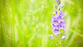 Mooie purpere weidebloem op een vage groene achtergrond stock footage