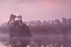 Mooie purpere zonsopgang op wild meer Royalty-vrije Stock Afbeeldingen