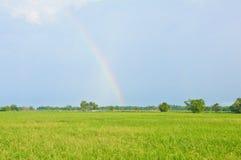 Mooie regenboog op het padieveld Royalty-vrije Stock Fotografie