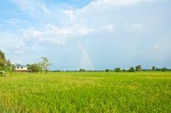 Mooie regenboog op het padieveld Royalty-vrije Stock Afbeeldingen