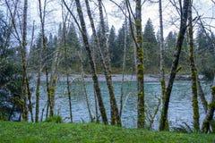 Mooie regenwoudbomen in Hoh River - VORKEN - WASHINGTON Royalty-vrije Stock Foto's