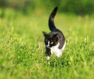 Mooie richels op het groene gras in de de lente heldere Zon royalty-vrije stock fotografie