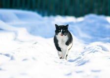 Mooie richels op witte pluizige sneeuw in de winterwerf en miauw royalty-vrije stock afbeelding