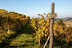 Mooie rijen van druivenwijnmakerij op blauwe hemel royalty-vrije stock afbeelding