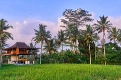 Mooie rijstterrassen in Ubud, het eiland van Bali Stock Fotografie