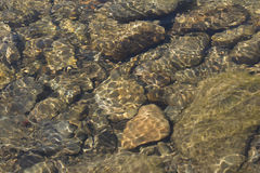 Mooie rimpelingen op rivierstroom over kleurrijke stenen in de zomer stock fotografie