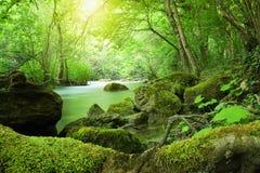 Mooie rivier in het zonnige bos Stock Afbeelding