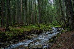 Mooie rivier tussen bomen het donkere bos bij de bergen Stock Foto