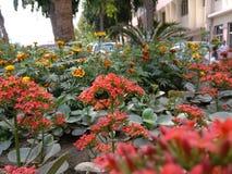 Mooie rode bloem Stock Foto