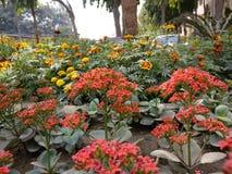 Mooie rode bloem Stock Afbeeldingen