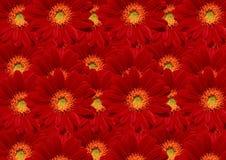 Mooie rode bloemen Stock Afbeeldingen