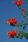 Mooie rode bloemen royalty-vrije stock afbeelding