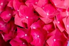 Mooie rode bloemen, bloemenachtergrond stock foto's
