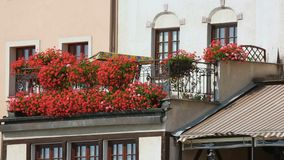 Mooie rode bloemen in potten die balkon van woningbouw, huis verfraaien stock videobeelden