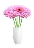 Mooie rode die gerberabloemen in vaas op wit wordt geïsoleerd Stock Fotografie