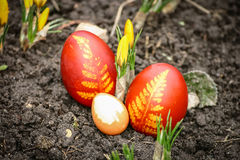 Mooie rode gekleurde paaseieren in de tuin royalty-vrije stock afbeeldingen