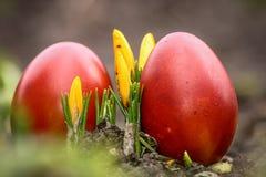 Mooie rode gekleurde paaseieren in de tuin Stock Foto