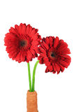 Mooie rode gerberabloemen Royalty-vrije Stock Foto
