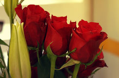Mooie Rode Rose Bouquet Stock Fotografie