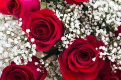 Mooie rode rozen Royalty-vrije Stock Afbeelding