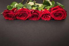Mooie rode rozen op zwarte achtergrond Royalty-vrije Stock Afbeelding