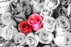 Mooie rode twee rozenbloemen bij een Parijse bloemopslag Stock Foto's