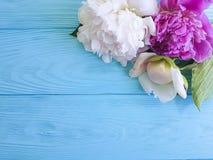 Mooie Romaanse de bloesem bruids kaart van bloem verse pioenen een blauwe houten achtergrond, de zomerkader stock fotografie