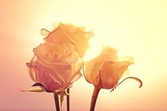 Mooie romantische bloemenkaart, huwelijk of valentijnskaart Stock Foto