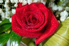 Mooie rood nam bloem voor valentijnskaartendag toe Rood nam met waterdruppeltjes toe De dalingen van water op namen toe Heldere r royalty-vrije stock afbeeldingen