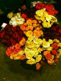 Mooie rood nam Chitagong toe stock fotografie