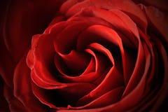Mooie rood nam de macro van de centrumclose-up toe Stock Foto's