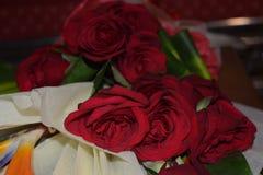 Mooie rood nam met selectieve nadruk toe Royalty-vrije Stock Foto's