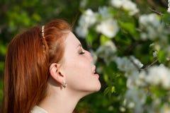 Mooie roodharige meisjesgangen in appelboomgaard Royalty-vrije Stock Afbeeldingen