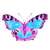 Mooie roze blauwe die vlinder, op een wit wordt geïsoleerd Stock Afbeelding